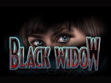 Выигрывайте деньги, играя в онлайн аппарат Черная Вдова на сайте Вулкан